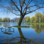 حديقة جزيرة تورنتو