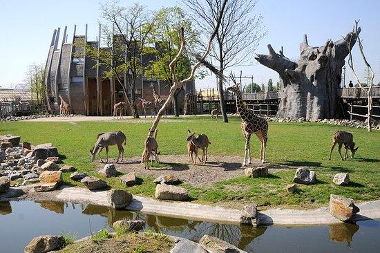 حديقة حيونات روتردام