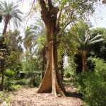 جزيرة النباتات