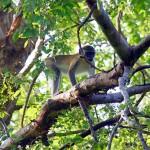 محمية نازينجا
