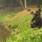 محمية لولا بونبو