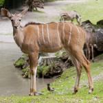 حديقة حيوان هيلابرون