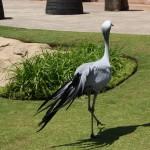 حديقة مونت كازينو للطيور
