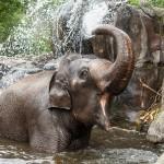 حديقة حيوان اوكلاند