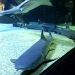 متحف عالم البحار