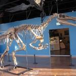 المتحف المركزي للديناصورات المنغولية