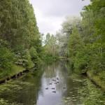 حديقة سوكولنيكي