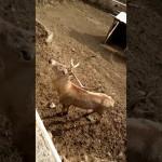 حديقة حيوانات جورجيا تبليسي