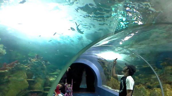 أكواريوم e1578254588780 - السياحية في مدينة جدة