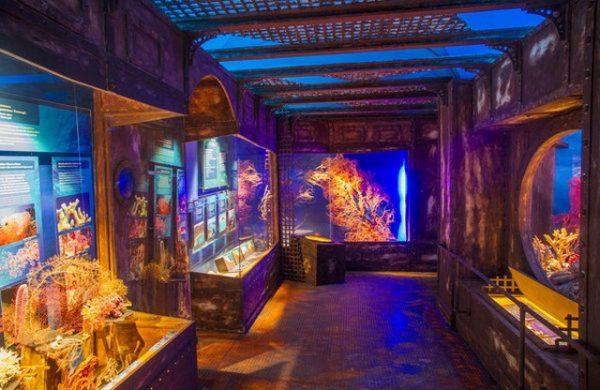 متحف بيت الطبيعة
