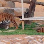 رسوم دخول حديقة الحيوان بالرياض تعرفوا عليها