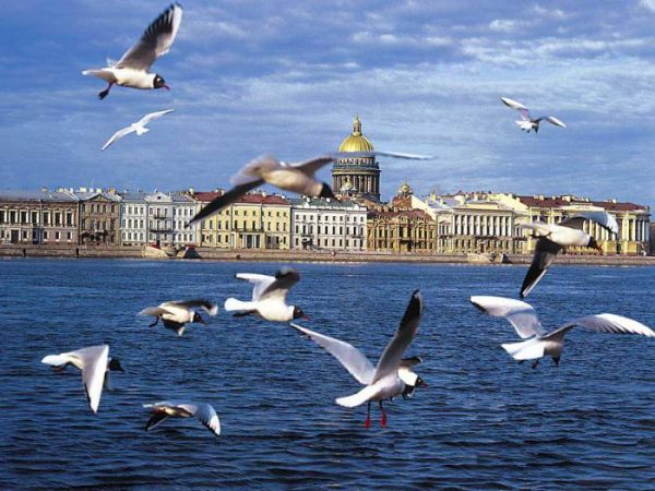 السياحة في بطرسبرغ