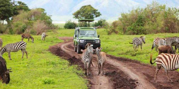 رحلتي الى سفاري افريقيا تستحق المغامرة