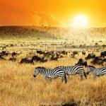 رحلتي الى كينيا سفاري